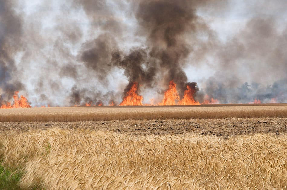 farmer - field on fire